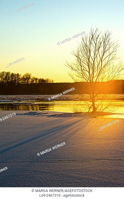 Winter at the riverbank in Biosphere reserve ''Elbe River Landscape'', Amt Neuhaus, Lower Saxony, Germany, Europe