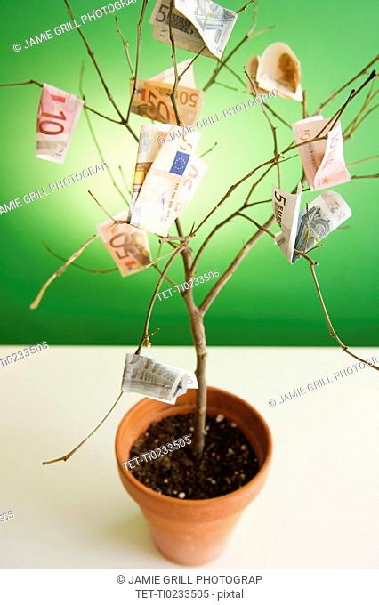 Close up of potted plant with euro banknotes on branches