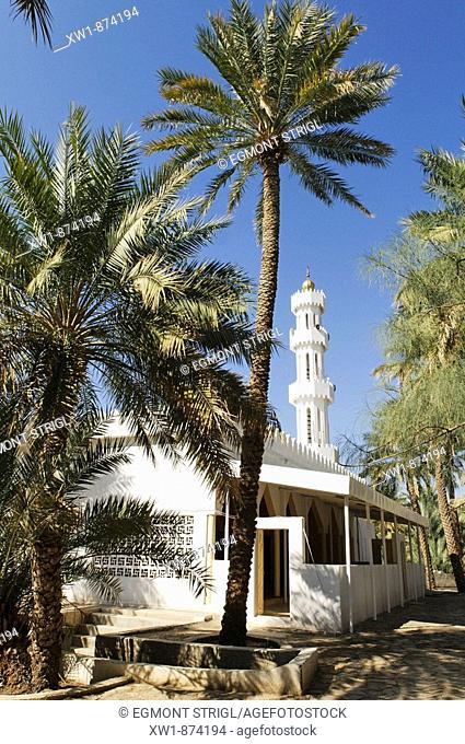 mosque and minarette in the palm garden of Mahadah oasis near Buraimi, Hajar al Gharbi Mountains, Al Dhahirah Region, Sultanate of Oman, Arabia, Middle East
