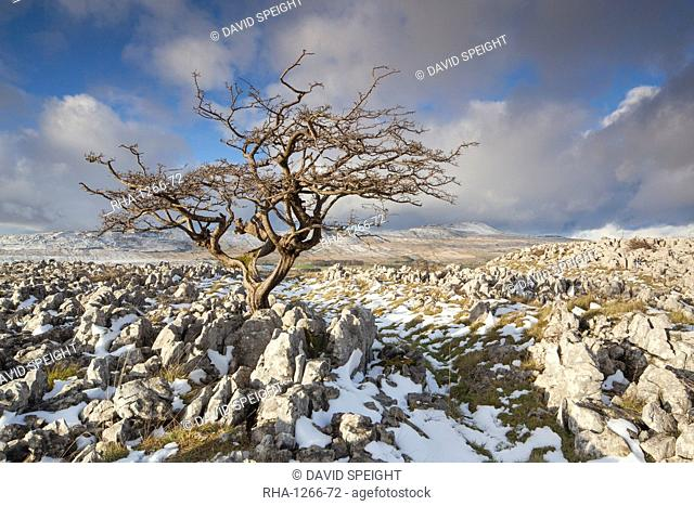 View to Whernside Hill from Limestone pavement at Ravens Scar above Southerscales Nature Reserve, Yorkshire Dales, North Yorkshire, Yorkshire, England