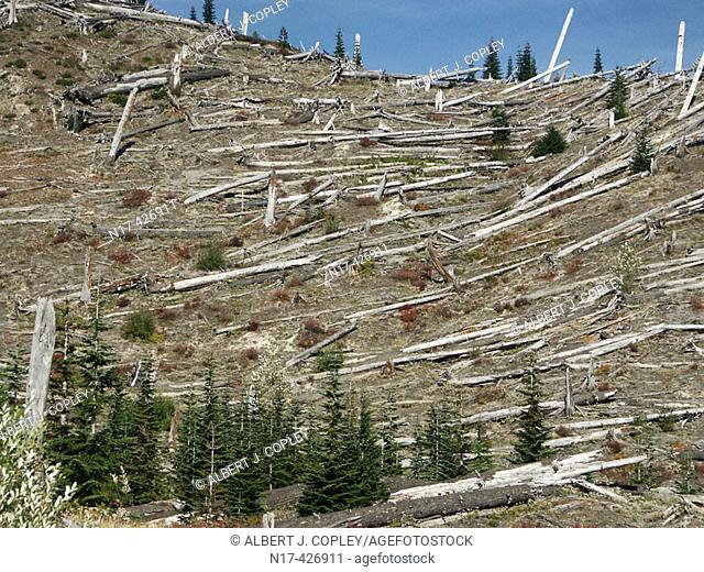 Destruction, Mount St. Helens blast. Washington, USA