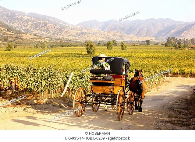 Huaso and Horse Cart, Chile Winelands