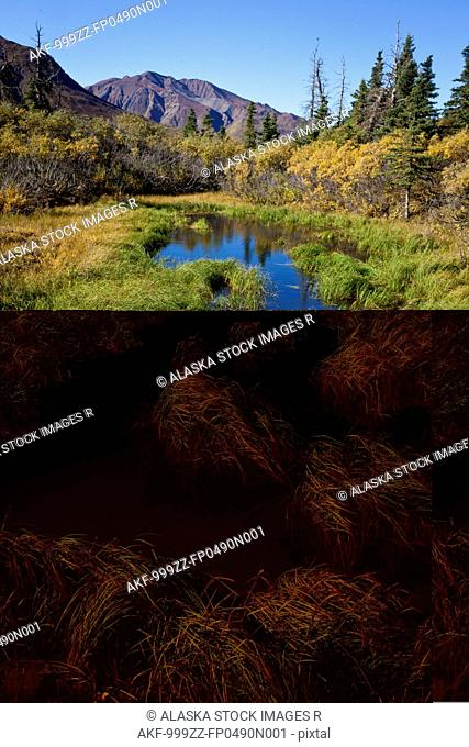 Pond and wetland area near mile 50 of the park road in Denali National Park and Preserve, Interior Alaska, Autumn