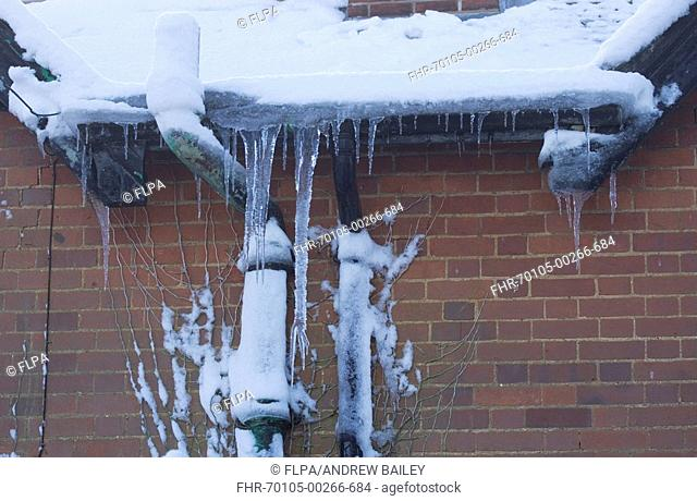 Icicles hanging from snow covered cottage roof gutter, Bentley, Suffolk, England, december 2009