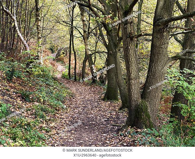 Path through Spring Wood in Nidd Gorge Woods in Autumn Knaresborough North Yorkshire England