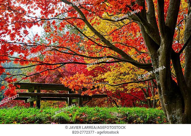 Trees in Autumn, Pagoetako Parke Naturala, Pagoeta Natural Park, Aya, Gipuzkoa, Basque Country, Spain, Europe