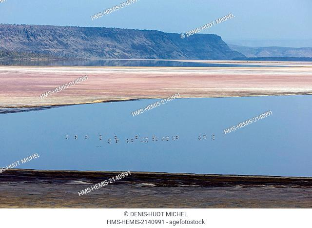 Kenya, lake Magadi, lesser flamingoes (Phoeniconaias minor)
