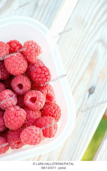 Close up of ripe raspberries in plastic box on garden table