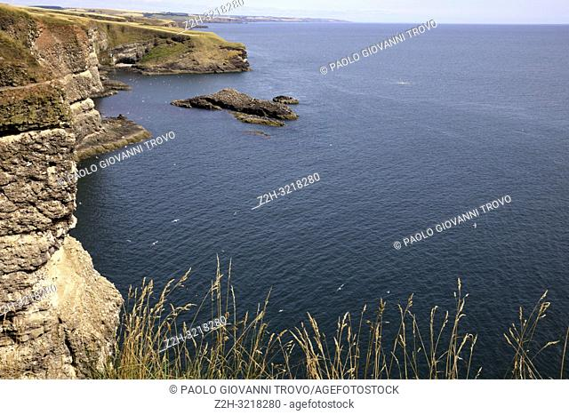 Cliff view at Crawton Bay, Scotland, Highlands, United Kingdom