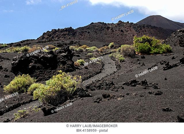 Track through the volcanic landscape with typical vegetation, the volcano de Teneguia on the right at the back, near Fuencaliente, La Palma, Canary Islands