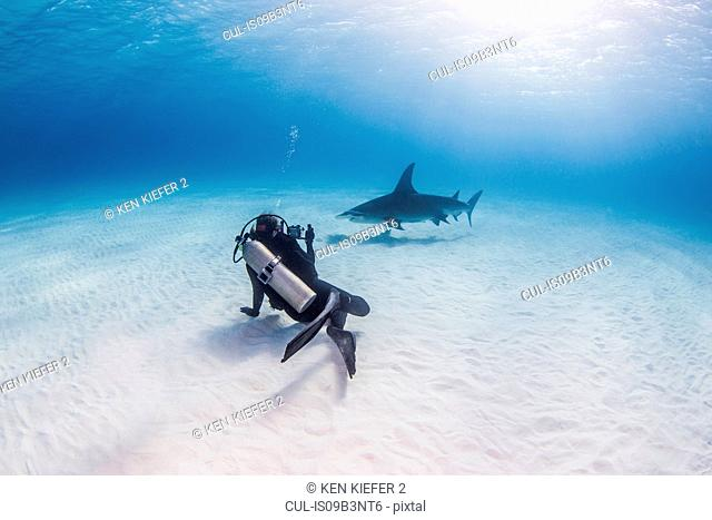 Diver swimming with Great Hammerhead shark, underwater view