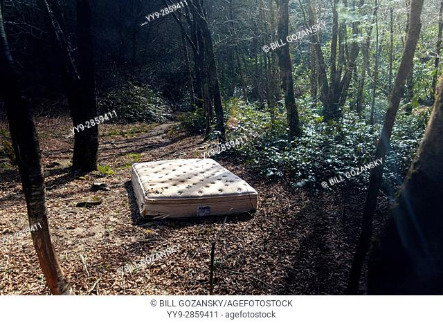 Abandoned Mattress in Forest - Pisgah National Forest, near Brevard, North Carolina, USA