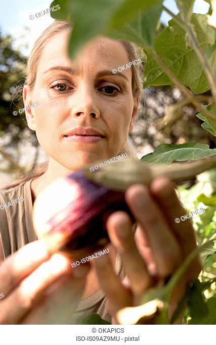Mature woman inspecting vegetables growing in garden, close-up