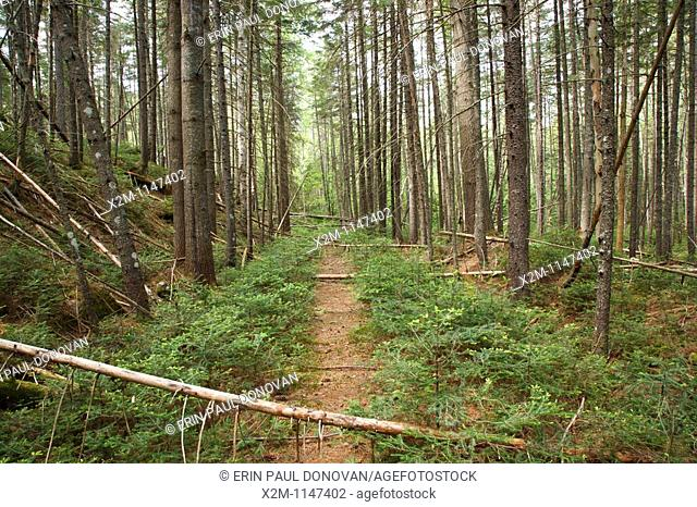 Pemigewasset Wilderness - Remnants of the East Branch & Lincoln Logging Railroad bed in the area of Stillwater Junction in Lincoln