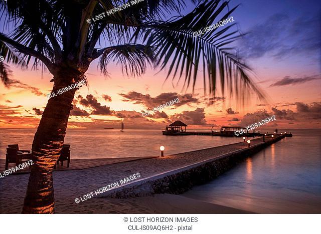 Beach trees at sunset, Ari Atoll, Maldives