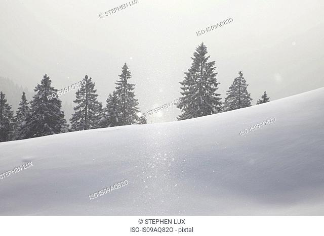 View of snow covered trees in mist, Brauneck, Lengries, Bavaria, Germany
