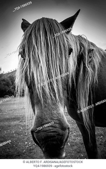 Portrait of a horse next to the monastery of San Antolin de Bedon, Llanes, Asturias, Spain