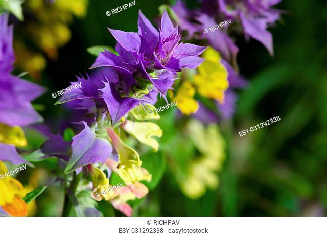 Vertical shot of purple yellow blooming flower