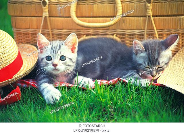 Two Kittens Resting Outside, Having a Picknick, Front View, Differential Focus