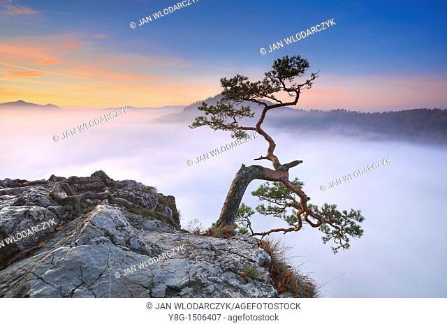 At Sokolica Peak before sunrise, Pieniny National Park, Poland, Europe