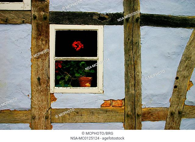 Geranium at the window of a blue half-timbered house