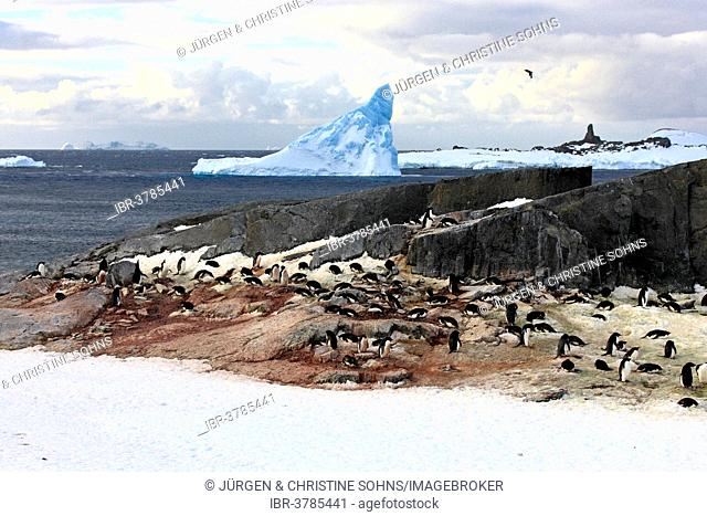Penguin colony, Adélie Penguins (Pygoscelis adeliae), Devil Island, Weddell Sea, Antarctica