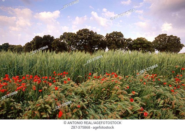 Landscape. Almansa. Albacete province. Castilla La Mancha. Spain