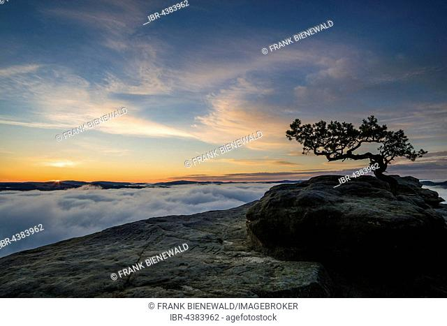 Thick fog is filling the valley of the river Elbe in Elbsandsteingebirge, seen from Lilienstein at sunrise, Königstein, Saxony, Germany