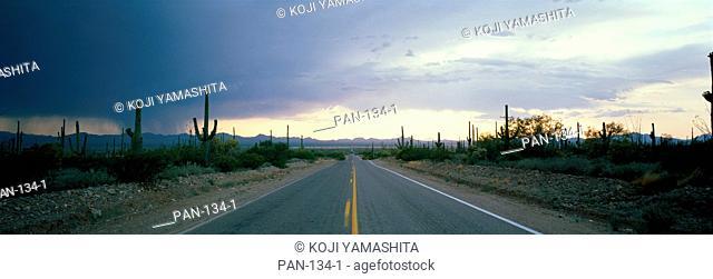 Desert Road, near Tucson, Arizona, USA