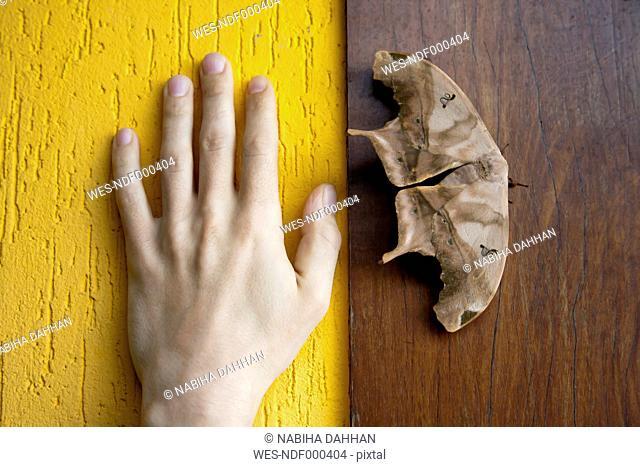 Brazil, Butterfly on wooden wall besides human hand