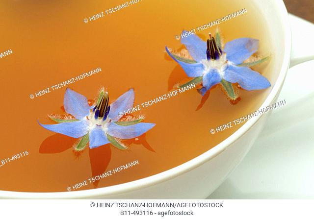 Borage (Borago officinalis) infusion