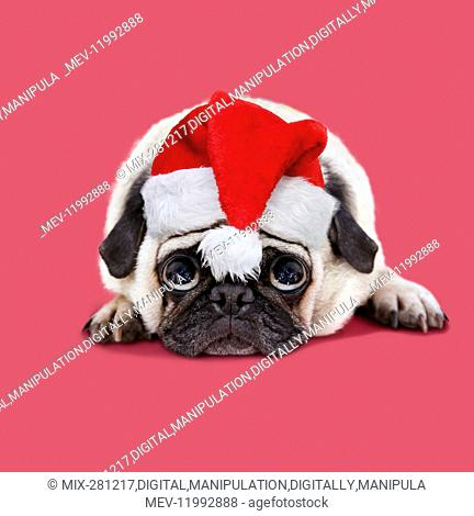 laying down wearing Christmas hat