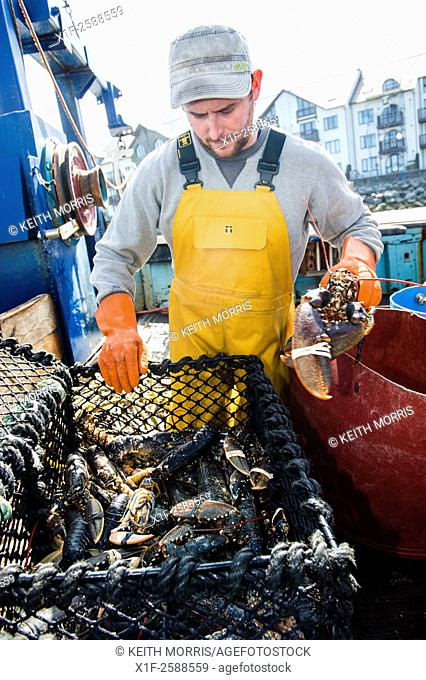 Inshore fishing in Cardigan Bay : Fishermen sorting out the week's catch on the deck of a small lobster and crab fishing boat working out of Aberystwyth harbour