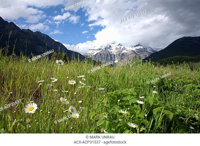 Cloud covered Mount Robson with flowers in foreground, Mount Robson Provincial Park, British Columbia, Canada