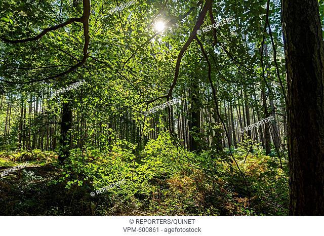 Brussels - 16 october 2016 Les etangs du bois de la Cambre. Un lieu apprecié des familles, des joggers et des promeneurs Terkamenbos en de vijver een plek...