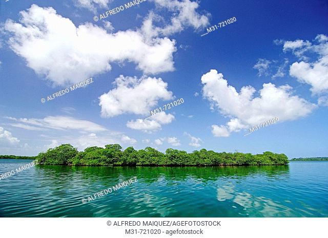 Mangroves at Bastimentos marine Park, Bocas del Toro islands, Rep.of Panamá, Central America. 2005