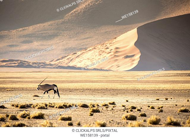 Sossusvlei, Namib desert, sand dunes during the golden hour. Namibia, Africa. Oryx Gemsbok