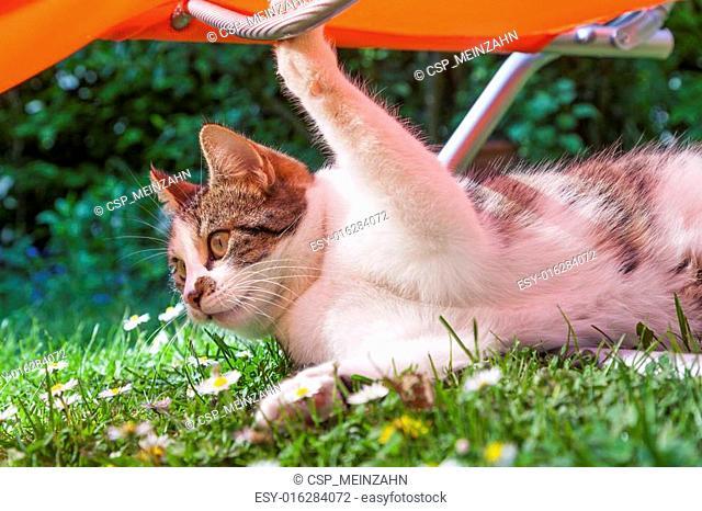 cute cat has fun playing under a sun lounger in the garden