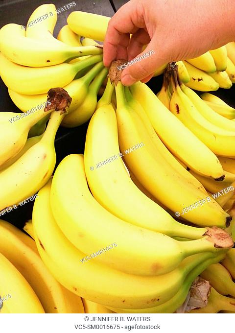 A man picks out bananas at the market in Washington State, USA