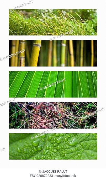 Collage of green backgrounds with grass and leaves