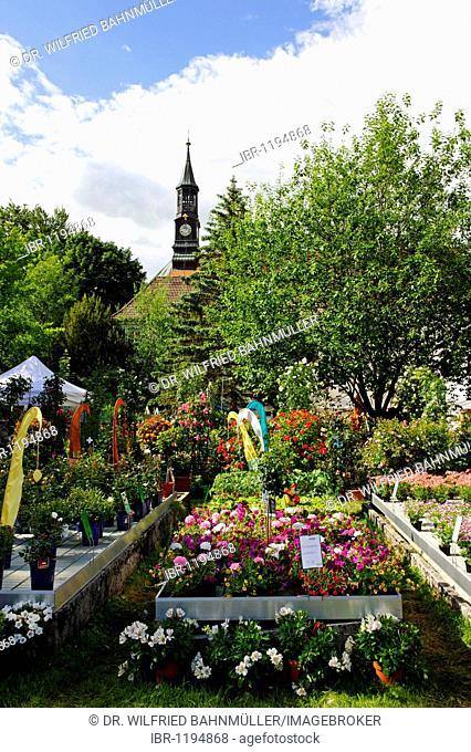 Rosentage Festival of Roses, monastery garden with Kapuziner church, Bad Toelz, Upper Bavaria, Germany, Europe