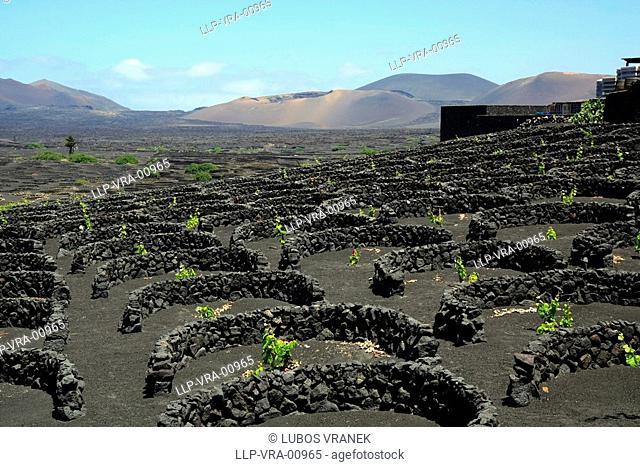 Winery La Geria, Lanzarote