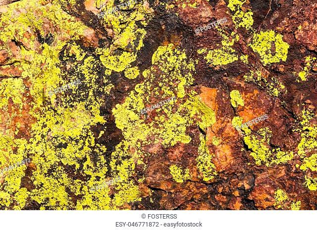 Closeup moss rock texture. Organic background