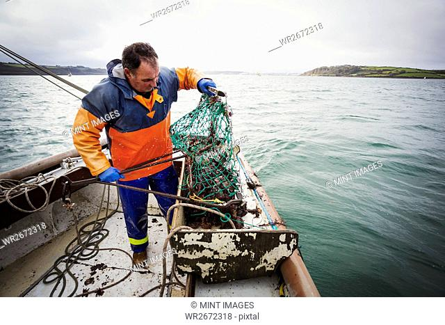 Traditional Sustainable Oyster Fishing. A fisherman opening a fishing creel on a boat deck