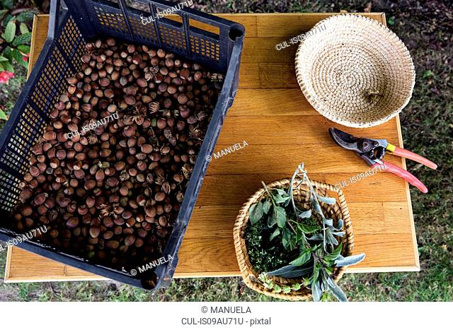 Crate of nuts on table in garden, overhead view