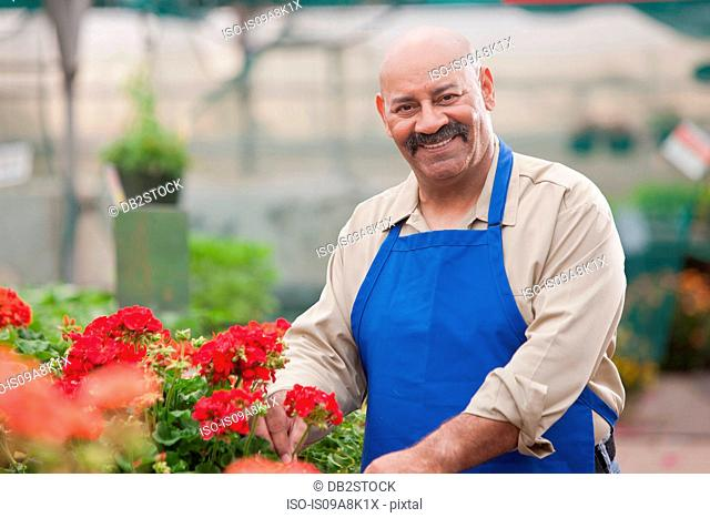 Mature man holding flowers in garden centre, smiling