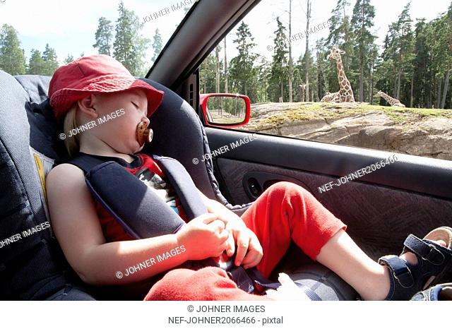 Girl sleeping in car while giraffes are visible in background