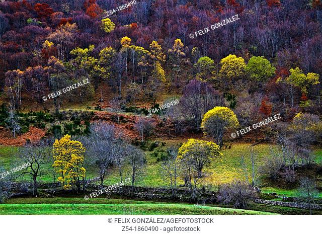 Forest in Autumn at Natural Park Somiedo, Asturias, Spain