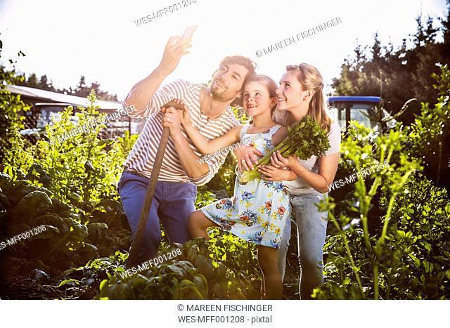 Germany, Northrhine Westphalia, Bornheim, Family working in vegetable garden
