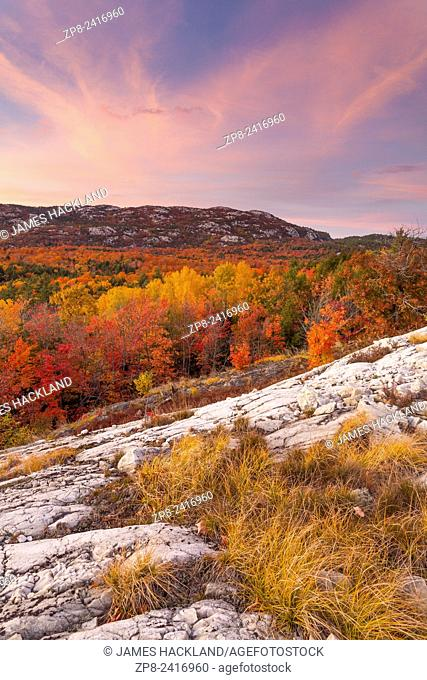 Spectacular fall colours with grass covered white quartzite in the foreground. Killarney Provincial Park, Ontario, Canada